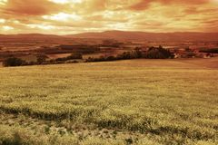 Green meadow under sunset sky Stock Image