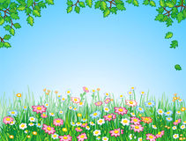 Green meadow, vector. Stock Photography