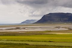 Green meadow Vestfjord - Iceland Royalty Free Stock Image