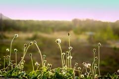 Green meadow. Stock Photos