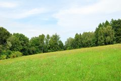 Green meadow with wild flowers and forest trees Stock Images