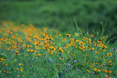 Green meadow Stock Photography