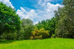 Free Green Meadows And Forests, Large Trees With Bright Skies And Clouds Stock Photo - 173675260