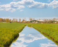 Green meadows and the canal near farm in  Netherlands. Royalty Free Stock Photography