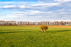 Green meadows on Dutch farmland Royalty Free Stock Photo
