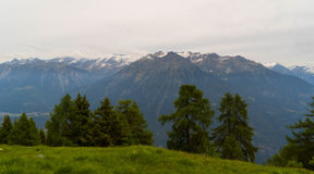Green meadows and fir trees in the mountains. Royalty Free Stock Photos