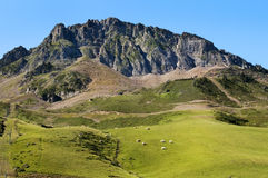 Green meadows in the French Pyrenees Royalty Free Stock Photos