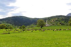 Green meadows , horses, cows, sheep Royalty Free Stock Photography