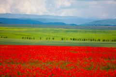Green meadows in mountain background. Blurred poppies in foreground royalty free stock photography