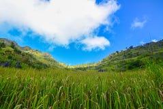 Green meadows on mountain in Chiang mai. Green meadows on mountain in Chiang mai, Thailand Stock Photography
