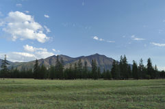 Green meadows in mountain valley of the river Royalty Free Stock Images
