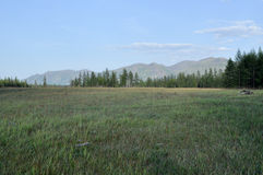 Green meadows in mountain valley Royalty Free Stock Image