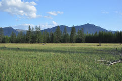 Green meadows in mountain valley Stock Images