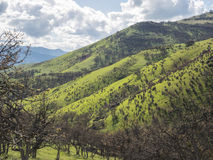 Green meadows on mountains with oak trees. Lush, green meadows color the mountains with boulders and oak trees that are showing their first green leaves of Stock Photography