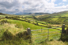 Green meadows near Dingle Stock Images
