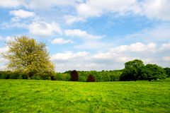 Green Meadows in the Park Stock Photography