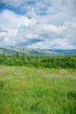 Green meadows Stock Photography