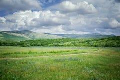 Green meadows Stock Image