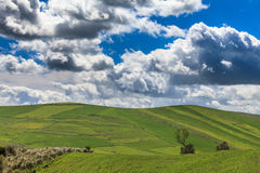 Green Meadows, trees, clouds and sky Stock Photo