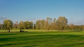 Green meadows with trees in the Flemish countryside. Landscape with green meadows and trees on a sunny day with clear blue sky in the Flemish countryside Royalty Free Stock Image