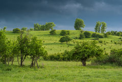 Green Meadows under the Thunder Sky Royalty Free Stock Image