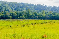 Green mealow. On Khaoyai National Park, Thailand Royalty Free Stock Images