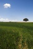 Green mediterranean landscape Royalty Free Stock Images