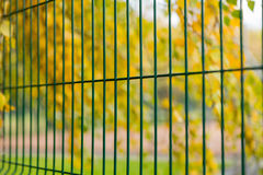 Green metal fence on the background of yellow leaves of trees Stock Photography
