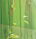 Green metal fence. narrow dept of field focuc Royalty Free Stock Photo