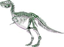 Green metallic Tyrannosaurus rex Skeleton. This is a Rendering, which shows a skeleton from a Tyrannosaurus rex, also called T-Rex in green metallic chrome Stock Photography