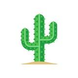 Green mexican saguaro cactus Stock Photos
