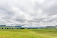 Green middel field Stock Photo
