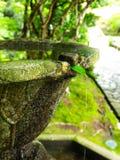 Green mineral spring in Honenin, Kyoto. stock photo