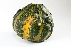 Green mini pumpkin. A green mini pumpkin on white Royalty Free Stock Image