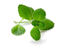 Green Mint Stock Images