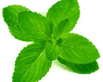 Green mint. Isolated on white background Royalty Free Stock Image
