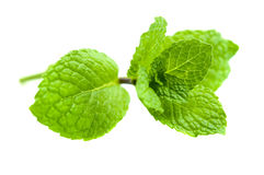 Green Mint Stock Photos