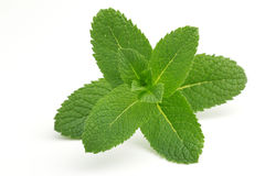 Free Green Mint Royalty Free Stock Image - 41452436