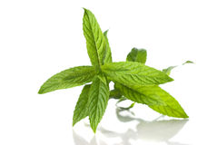 Green mint isolated Royalty Free Stock Image