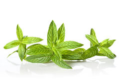Green mint isolated Stock Images