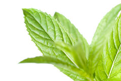 Green mint isolated on white Royalty Free Stock Photography