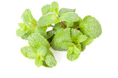 Green mint leaf Royalty Free Stock Photography