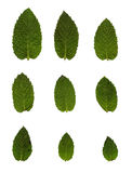 Green mint leafs Royalty Free Stock Photography