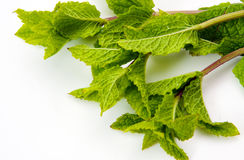 Green mint leaves Stock Photo