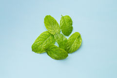 Green mint leaves. Stock Image