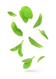Green mint leaves falling in the air Stock Images