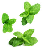 Green mint leaves royalty free stock images