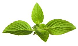 Green mint leaves isolated on white Royalty Free Stock Photos