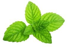 Green mint leaves isolated Stock Photos