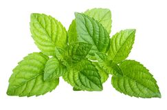 Green mint leaves isolated stock photo